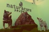 彫刻家・はしもとみおさんがデザインした、女性向け自販機『naturacure(ナチュラキュア)』がお披露目(24日=東京・JR恵比寿駅) (C)oricon ME inc.