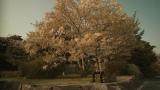 桜の木の下で撮影されたclass「桜」ミュージックビデオ