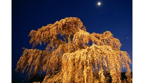 次に皆既月食×桜のコラボが見られるのは17年後! 4月4日の天気やいかに?