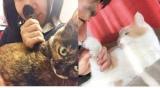 猫の肉球のような香りのハンドクリーム『あの猫(こ)とおそろい!? プニプニ肉球の香りハンドクリーム』開発の舞台裏……肉球のにおいをかぎまくるスタッフ