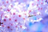 ネット銀行各社の「春の特典」丸分かり