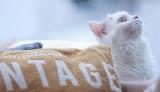 オシャレな猫カフェ「MoCHA」の新店舗が、東京・渋谷宇田川町にオープン