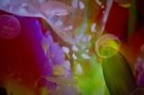 『蜷川実花×すみだ水族館 クラゲ万華鏡トンネル』昼バージョンの水槽の様子