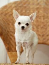 2015年犬の名前ランキングは「ココ」が5連覇