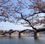 トリップアドバイザーがユーザーの声をもとに実施した「口コミで選ぶ日本の橋ランキング」7位の錦帯橋(山口県)