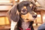 """ペットの治療や入院時に役立つ""""ペット保険""""だが、加入率はいまだ4〜5%程度(写真はイメージ)"""