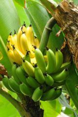 バナナにはお肌に嬉しい栄養成分がたっぷり
