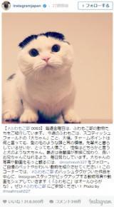 日本で人気のハッシュタグ1位は猫(ねこ)
