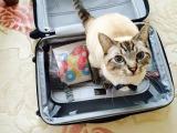 国内外への旅行が増える年末年始。荷造り前に役立つパッキング術を紹介!