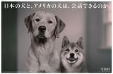 2010年 宝島社企業広告「日本の犬と、アメリカの犬は、会話できるのか。」