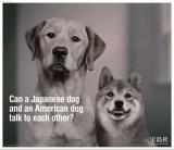 2010年 宝島社企業広告「日本の犬と、アメリカの犬は、会話できるのか。」(英語)