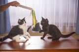 おもちゃで遊ぶ様子 (C)2015杉作・実業之日本社/「猫なんかよんでもこない。」製作委員会