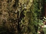 福山雅治のナビゲートで地球と生物の驚異の姿に迫ったNHKスペシャル『ホットスポット 最後の楽園 season2』より。第5回スンダランド ボルネオ島の回に登場するバッタの仲間(擬態)(C)2016 NHK