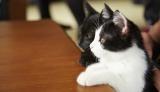 現在上映中の『猫なんかよんでもこない。』に出演している(左から)りんご、のりこ (C)2015杉作・実業之日本社/「猫なんかよんでもこない。」製作委員会