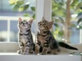 """2月22日は""""猫の日""""♪ 恒例の「猫の名前ランキング」が発表"""