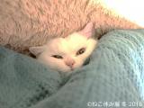 映画やドラマ、SNSで大活躍の猫(C)ねこ休み展 冬 2016