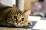 アニコム損保は2015年の1年間に、契約者がイヌとネコに掛けた費用を調査した(写真はイメージ)