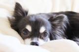 ペットにも花粉症があることを知っている飼い主は48.3%と判明(写真はイメージ)