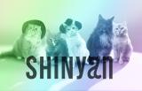 猫5匹組SHINyan(シャイニャン)がデビュー(写真左からオニュにゃん、ジョンにゃん、テミにゃん、ミノにゃん、キーにゃん)