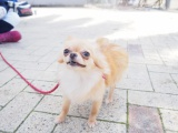 アニコム損保は「犬の熱中症週間予報」の配信を開始した(写真はイメージ)