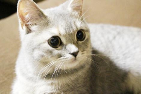 アイペット損保は「ペットの傷病ランキング」を発表した(写真はイメージ)