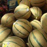 トスカナメロン(Tuscan Melon)