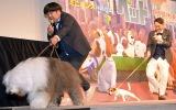 (左から)映画『ペット』で犬に翻弄されるバナナマン・日村勇紀、設楽統 (C)ORICON NewS inc.