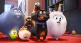 映画『ペット』で宮野真守が声優を務める鷹のタイベリアス(一番後ろ)と梶裕貴が声優を務めるモルモットのノーマン(前列左から2番目)が初めて絡む映像を公開 (C)Universal Studios.