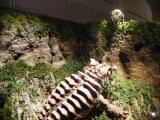 『大ゴジラ特撮王国 YOKOHAMA』で展示されているゴジラ対パラゴン 箱根・大涌谷の戦い(C)ORICON NewS inc.