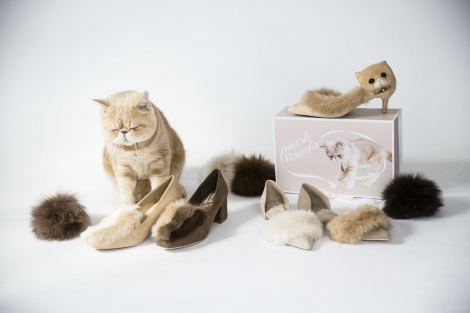 レディースブランド「RANDA」とインスタで人気の猫「Mash」のコラボシューズが登場!