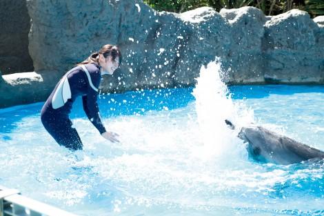 高山一实首本写真集《或许恋爱了》中的一张。拍摄的是在鸭川海洋世界中和海豚天真嬉戏的高山的样子。