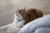 リブレより発売中の『相撲部屋の幸せな猫たち』より(C)libre 2016