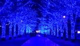 『青の洞窟SHIBUYA』の様子
