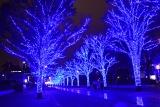 代々木公園のケヤキ並木約250メートルを利用した『青の洞窟SHIBUYA』の様子