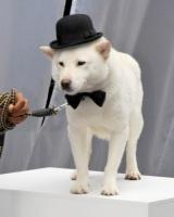 写真はソフトバンクのCMでおなじみのお父さん犬 (C)ORICON NewS inc.