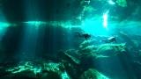 セノーテを泳ぐ=『感動地球スペシャル「カリブ海と聖なる泉〜大島優子 メキシコの旅〜」』(C)テレビ静岡