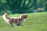 ペットと一緒に旅行を楽しめる方法を紹介する(写真はイメージ)