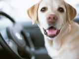 """ペットと一緒に""""安全で快適なドライブ""""を楽しむためにはどうしたら良い?"""