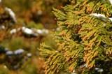"""今年も""""花粉""""の季節が到来。花粉症の病状を伝える英語フレーズを紹介する"""