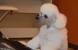 2月24日放送、テレビ東京系『超かわいい映像連発!どうぶつピース!!』より。ピアノを弾く犬!?が登場(C)テレビ東京