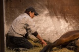 NHKの特集ドラマ『絆 走れ奇跡の子馬』場面写真 (C)NHK