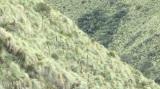 『世界遺産』放送1000回スペシャルより南米・エクアドルの世界遺産・サンガイ山の植物 (C)TBS