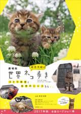劇場版『岩合光昭の世界ネコ歩き』は今秋公開 (C)Mitsuaki Iwago