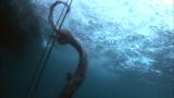 日本テレビ系人気番組『ザ!鉄腕!DASH!!』で城島茂と山口達也が『シン・ゴジラ』のモデルになった幻の古代サメを生け捕り (C)日本テレビ