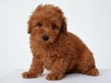 犬の名前ランキング2011、調査開始7年目で「ココ」が初の首位に