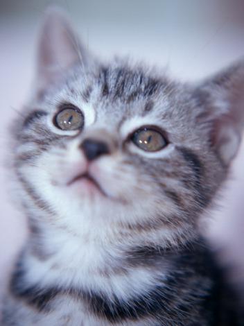 第8回『猫の名前ランキング』1位は「ソラ」(※写真はイメージです)
