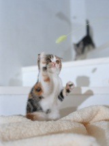 「第8回 猫の名前ランキング」が発表! 人気の名前は?(※写真はイメージです)