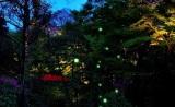 ホテル椿山荘東京「ほたるの夕べ」