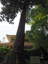 大河ドラマ『おんな城主 直虎』のロケも行われた浜松市の方広寺。樹齢600年といわれる半僧杉