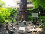 大河ドラマ『おんな城主 直虎』のロケも行われた浜松市の方広寺。樹齢600年といわれる半僧杉の根もと (C)ORICON NewS inc.